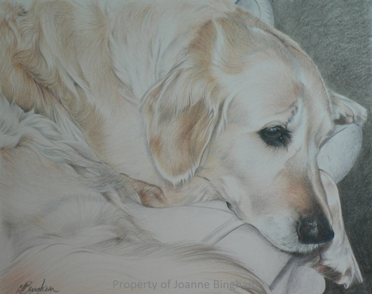 Dog 11 watercolour 7