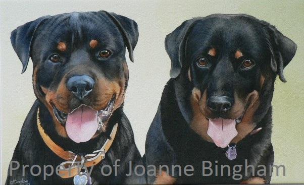 Dog 12 watercolour 8