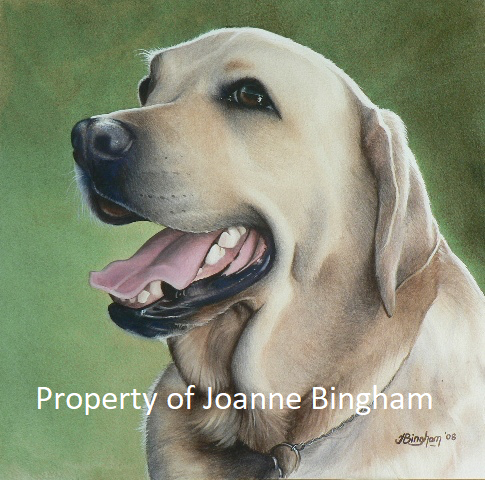 Dog 14 watercolour 10