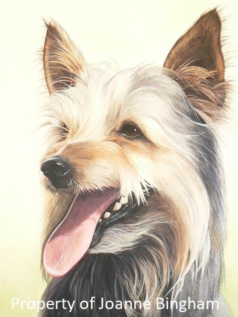 Dog 15 watercolour 11