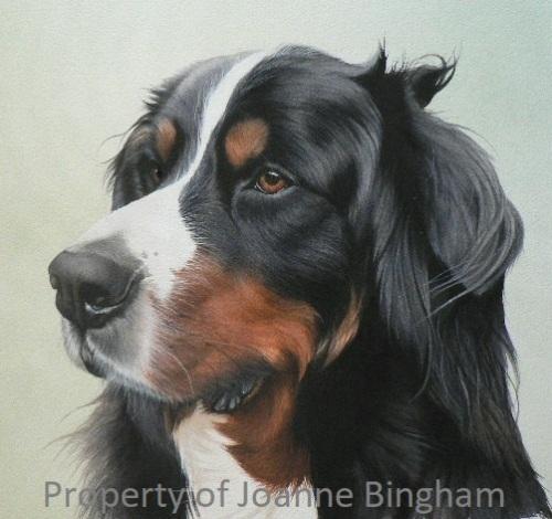 Dog 17 watercolour 13