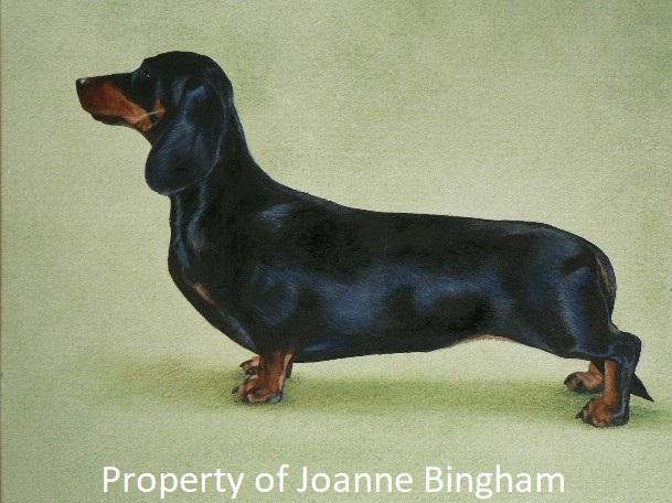 Dog 18 watercolour 14