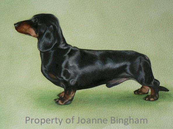 Dog 20 watercolour 16