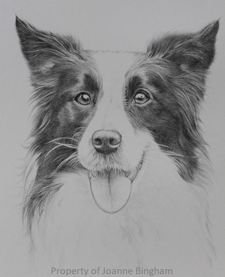 Dog 22 Pencil 6