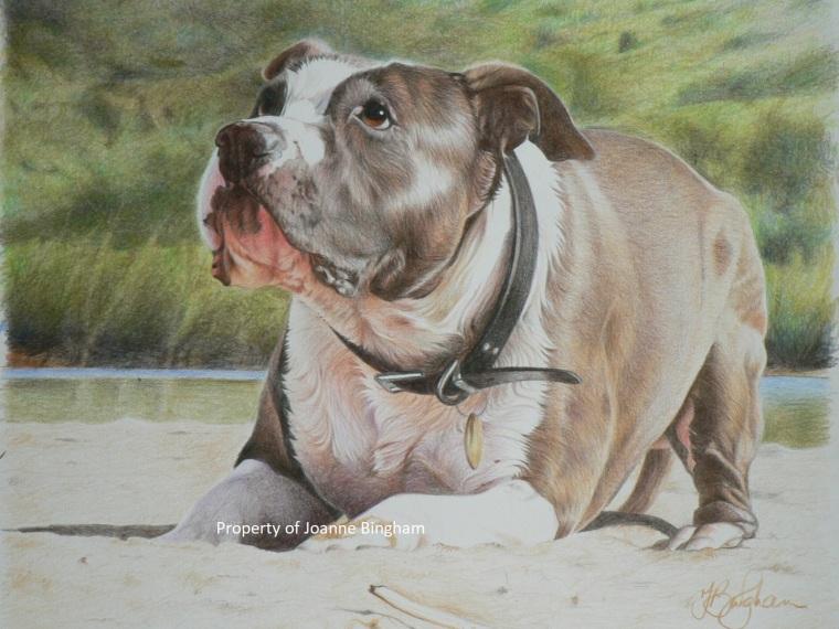 Dog 4 pencil 1