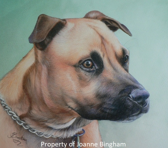 Dog 8 Pencil 4