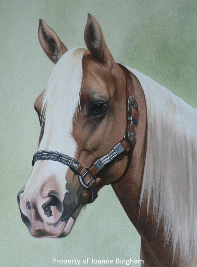 Horse 10 watercolour 9