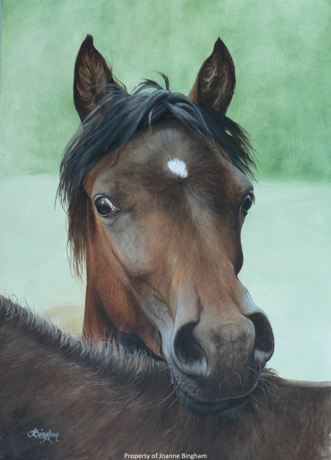 Horse 12 watercolour 11