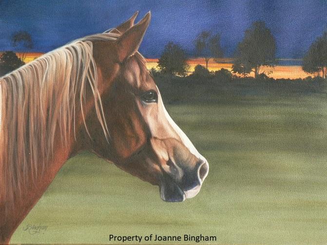 Horse 14 watercolour 13