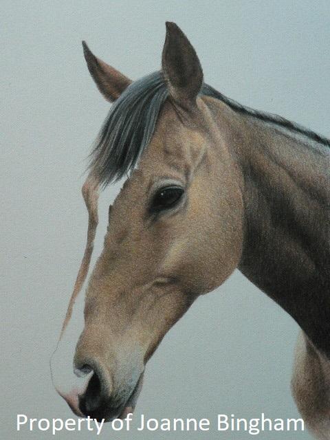 Horse 15 watercolour 14