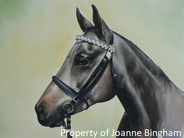 Horse 16 watercolour 15