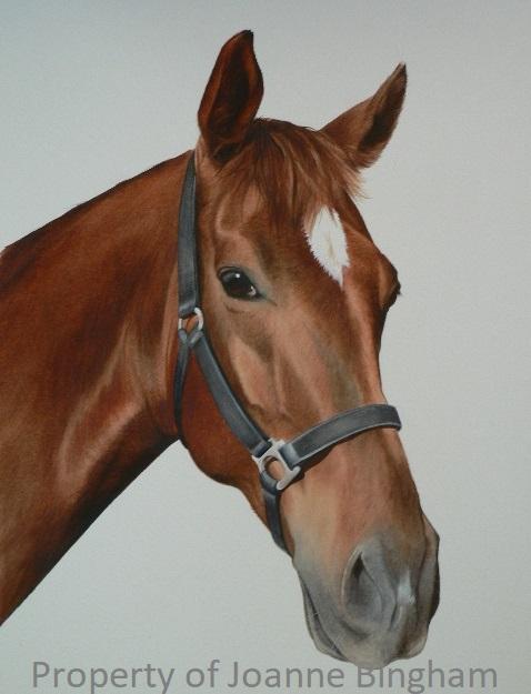 Horse 19 watercolour 17