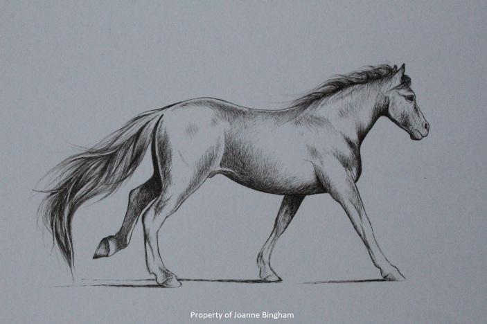 Horse 2 pencil 1