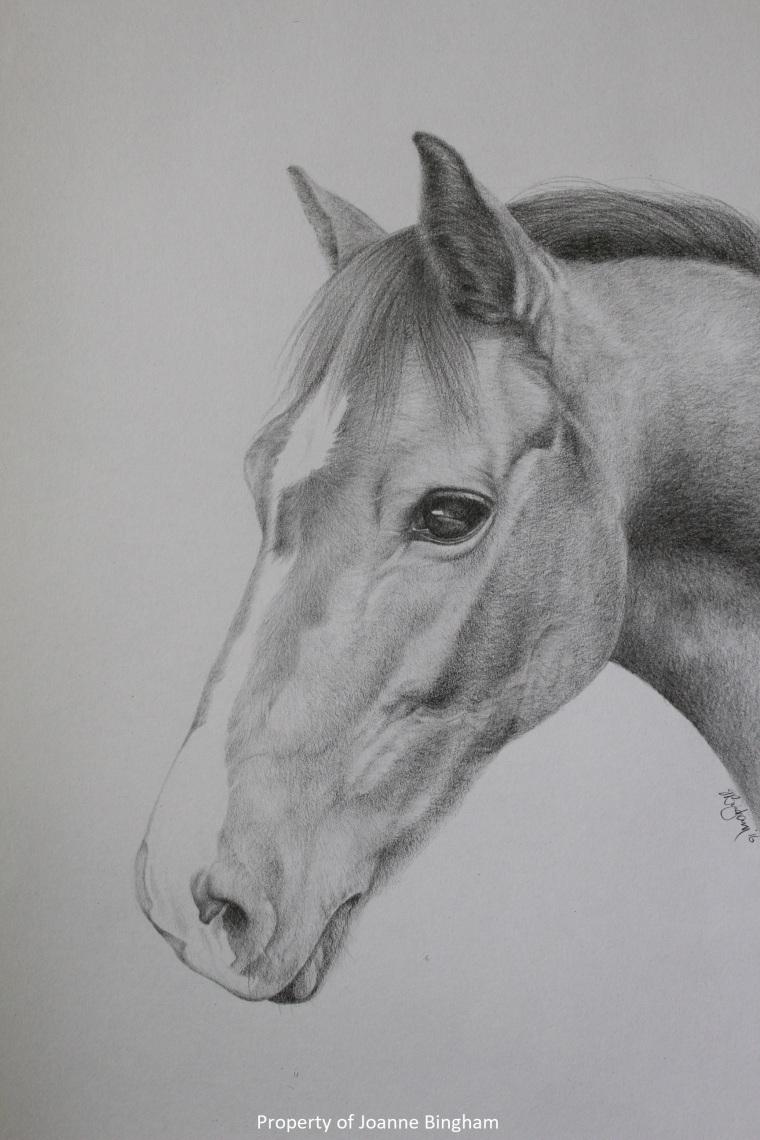 Horse 6 pencil 2
