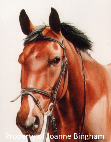Horse 7 watercolour 5